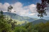 Serra Do Mar Jungle in Sao Paulo State Impressão fotográfica por Alex Saberi