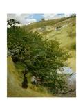 Woodpile in Landscape Stampa giclée di Vittorio Matteo Corcos