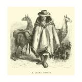 A Llama Driver Giclee Print by Édouard Riou