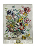 April, from 'Twelve Months of Flowers', 1730 Giclée-vedos tekijänä Pieter Casteels
