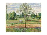 Meadow with Grey Horse, Eragny, 1893 Reproduction procédé giclée par Camille Pissarro