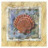 Seemuschel Kunstdrucke von A. Vega