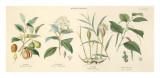 Spice Plants I Kunstdrucke von William Rhind