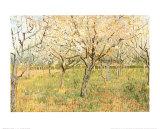 Orchard in Blossom Plakater af Vincent van Gogh