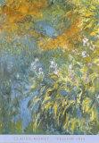 Yellow Iris Posters av Claude Monet