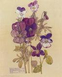 Wild Pansy Plakat af Charles Rennie Mackintosh