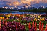 Grand-Teton-Nationalpark Kunstdrucke