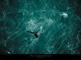 Baleine Posters par Yann Arthus-Bertrand