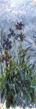 Schwertlilien Poster von Claude Monet