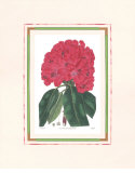 Rhododendron I Pósters