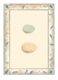 Antique Eggs II Kunstdrucke