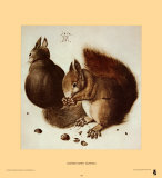 Écureuils Affiches par Albrecht Dürer