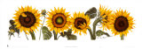 Sunflowers Prints by Patricia Shilling-Stewart