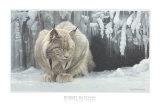 Dozing Lynx Posters af Robert Bateman