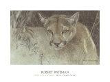 Tropical Cougar Posters av Robert Bateman
