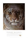 Tiger Portrait Affischer av Robert Bateman