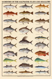 Game Fish of the Saltwater Flats and Shallows Posters