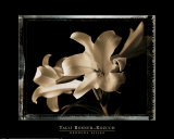 Bermuda Lilies Prints by Talli Rosner-Kozuch