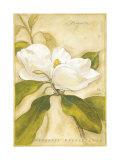 Magnolia Prints by Meg Page