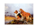 Collies in a Highland Landscape Posters av Wright Barker