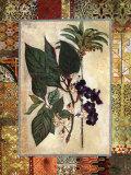 Garden Tropicalismo II Posters por John Douglas
