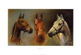 Wij drie koningen, afbeelding drie paardenhoofden Posters van Susan Crawford