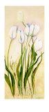 Tulips Posters by Heide Konig
