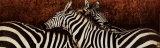 Two Zebras Poster by Fabienne Arietti