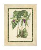 Fitch Orchid VI Impressão giclée por J. Nugent Fitch