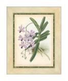 Fitch Orchid V Impressão giclée por J. Nugent Fitch