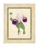 Fitch Orchid I Impressão giclée por J. Nugent Fitch