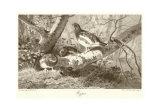 Schneehuhn Kunstdrucke von Archibald Thorburn