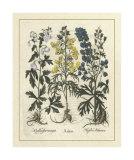 Besler Floral I Impressão giclée por Besler Basilius