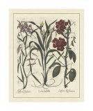 Besler Floral III Impressão giclée por Besler Basilius