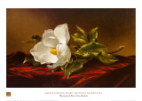 Magnolia Grandiflora Poster by Martin Johnson Heade