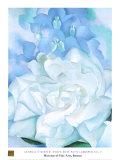 白い薔薇とデルフィニウムNo. 2 高品質プリント : ジョージア・オキーフ