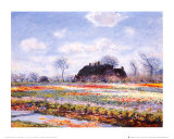 Tulip Fields at Sasenheim Posters by Claude Monet