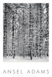 Barrskog i snö, Yosemite nationalpark, 1932|Pine Forest in Snow, Yosemite National Park, 1932 Posters av Ansel Adams