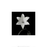 Flower Series VI Plakater af Walter Gritsik