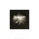 Flower Series I Posters af Walter Gritsik