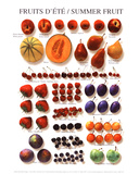 Summer Fruit Plakat