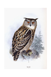 Eagle Owl Giclee Print by Johan Gerard Keulemans