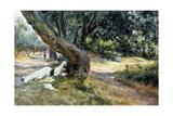 Shade in Olive Grove Giclée-Druck von Francesco Vinea