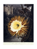 The Night Blowing Cereus, 1800 Giclee Print by Philip Reinagle