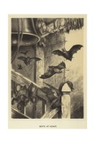 Bats at Home Giclee Print