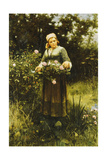 Gathering Roses Giclee Print by Daniel Ridgway Knight