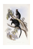 Tree Kangaroo Giclee Print by Henry Constantine Richter