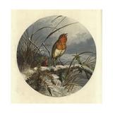 The Christmas Carol Singer Reproduction procédé giclée par Harrison William Weir