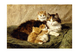 Contentment, 1900 Giclee Print by Henriette Ronner-Knip