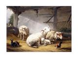 Sheep, Rabbits and a Chicken in a Barn, 1859 Giclée-Druck von Eugene Joseph Verboeckhoven